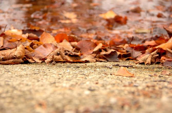 Herbstblätter beim Obeliskteich im Schlosspark Eisenstadt