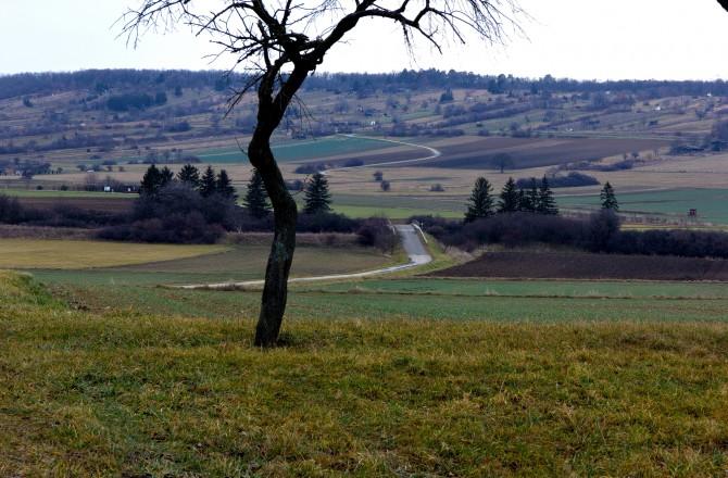 Felder bei Loipersbach im Nordburgenland, Blick Richtung Kogelberg - ein wenig burgenländische Toskana?