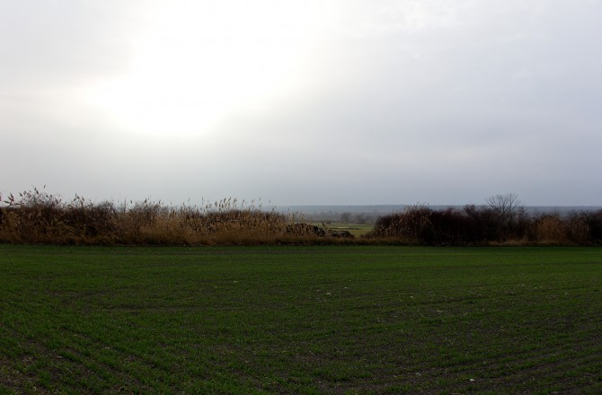 Blick von Rust Richtung Neusiedlersee