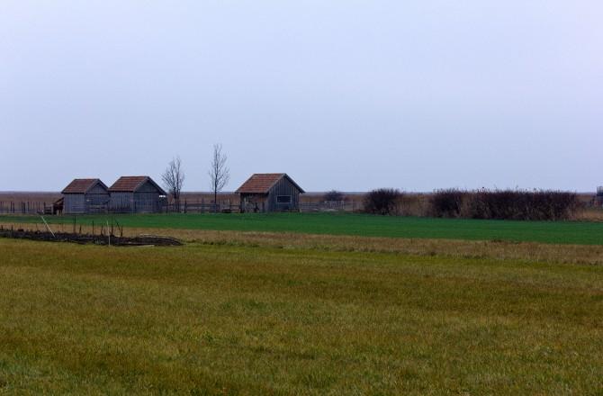 Blick vom Vogelschutzgebiet in Rust Richtung Neusiedlersee