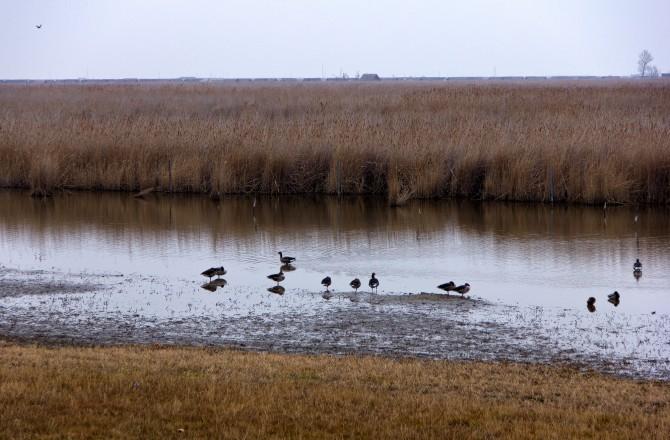 Vogelschutzgebiet in Rust am See
