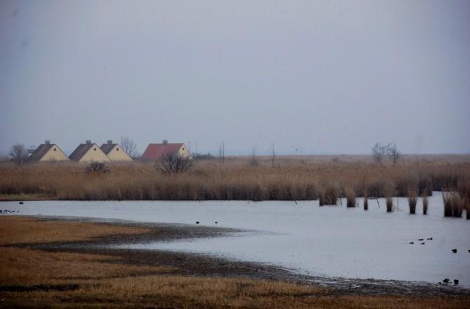 Blick vom Vogelschutzgebiet in Rust Richtung Neusiedlersee (Foto: Traude Triebel)