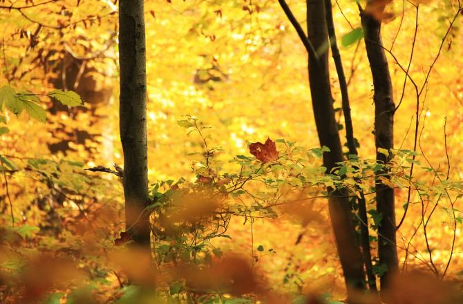 Herbst im Schlosspark Eisenstadt