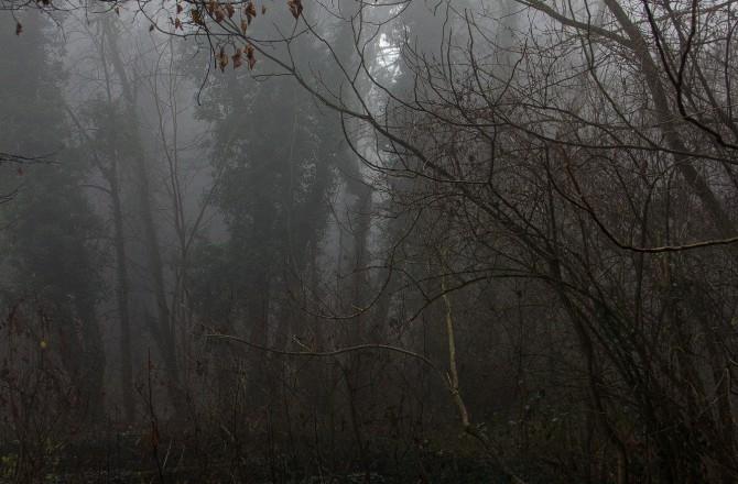 Wald im Nebel auf der Rosalia