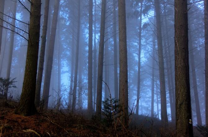 Nadelwald im Dezember