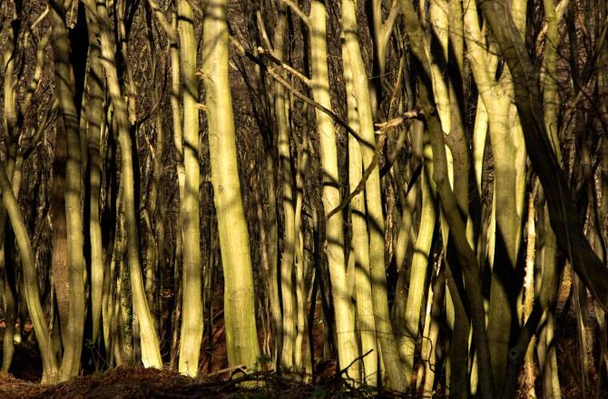 Bäume von der Sonne verzaubert