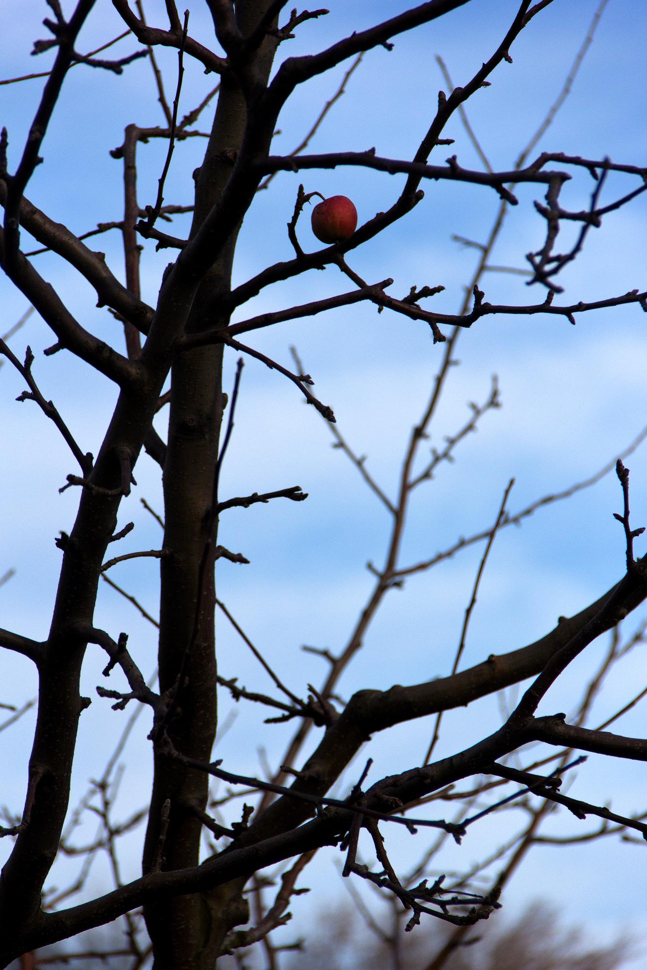 """Baum mit Apfel Im """"verschwundenen Dorf"""" bei St. Georgen nahe Eisenstadt"""