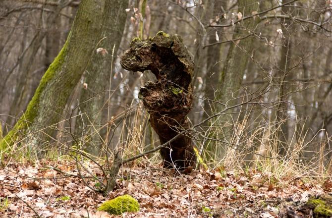 Grisu, der kleine Drache - im Leithagebirge gesichtet ;-)