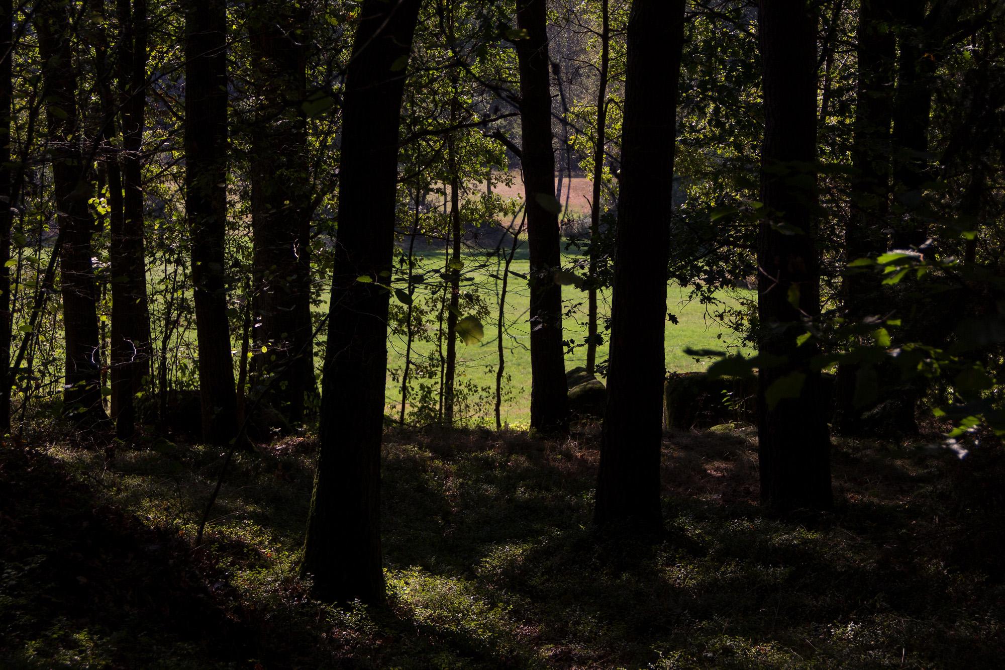 Im Elfenwald