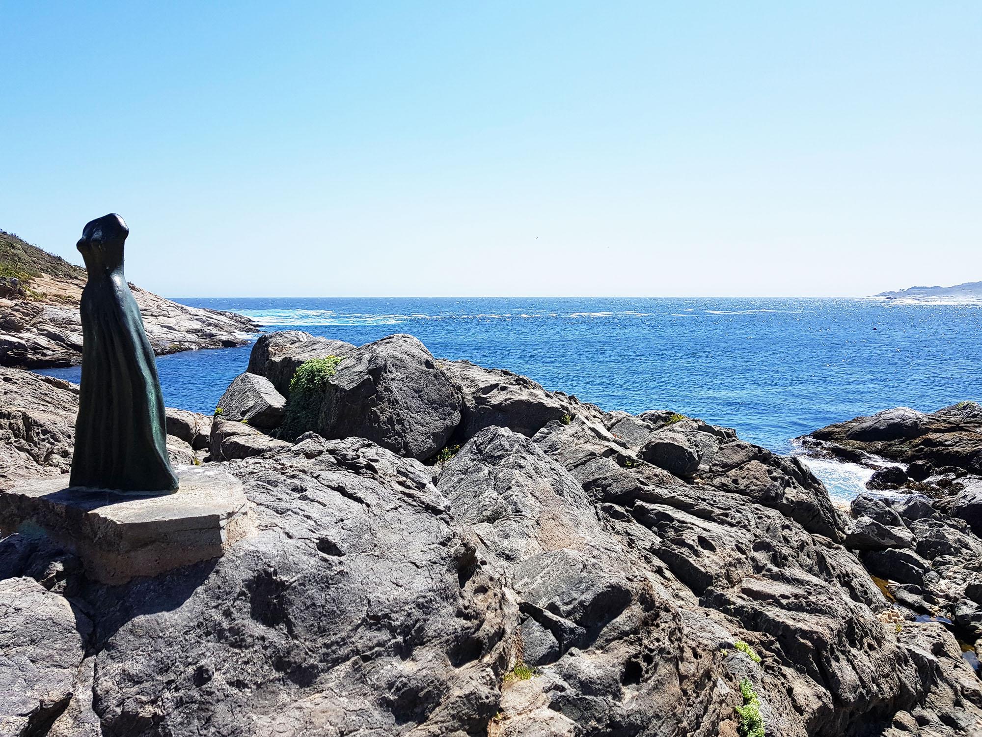 Steinpinguin in der Bucht von Zapallar
