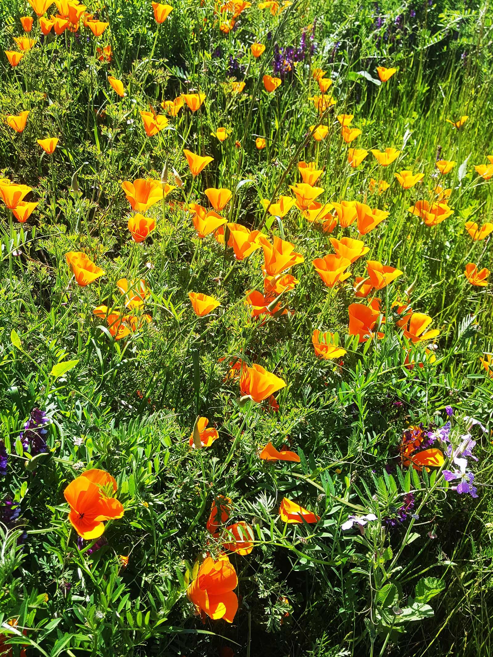 Frühling, auch in Zapallar :-)